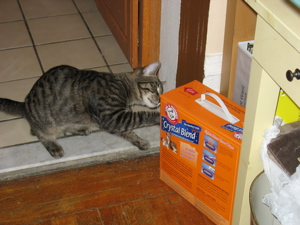 oliver kitty litter